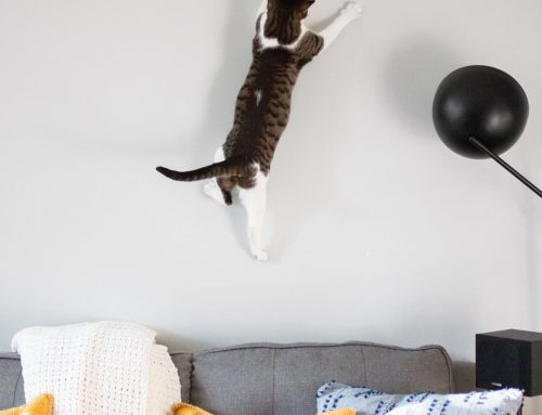 Stop cats from scratching furniture